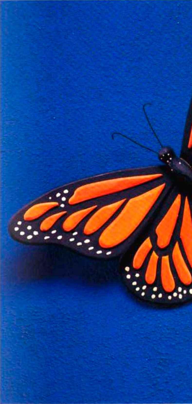 Monarch butterfly body - photo#7